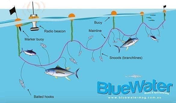 Catching Tuna Not Bycatch