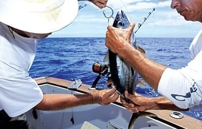 Hook And Rig Regulations When Using Bait