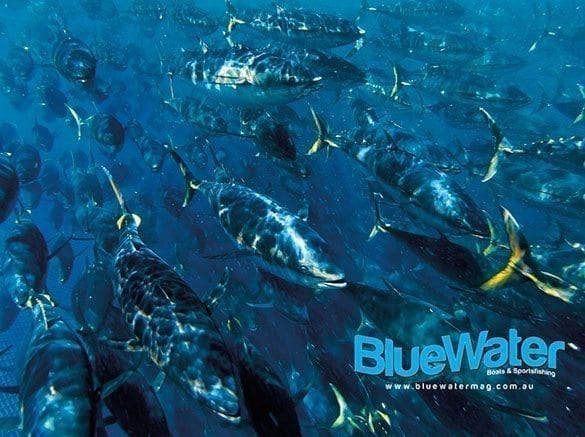 Sthn Bluefin Tuna Management