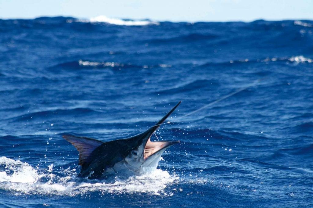 NSW: Sydney Offshore Fishing 1