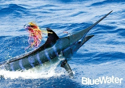 Refined Blue Marlin Techniques